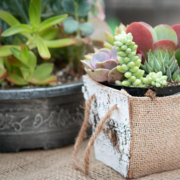 Oak390_Facebook_SqGalleryImg_succulentbirchplanters