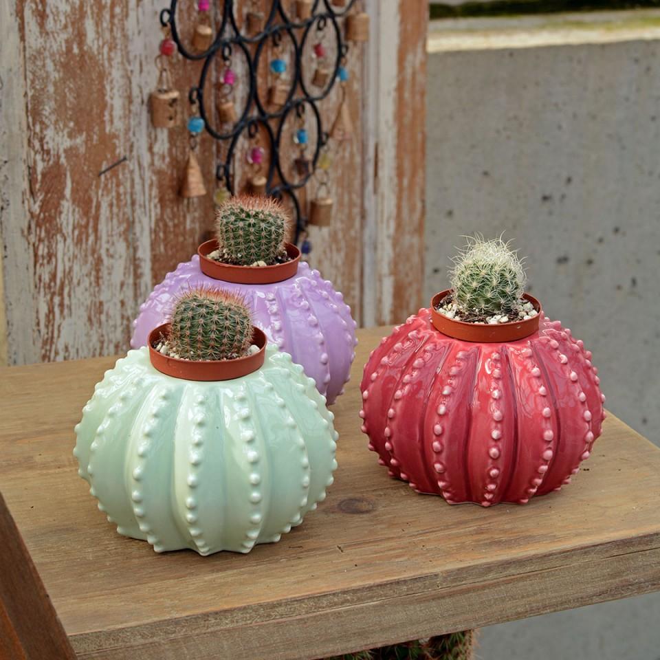 Oak477_Blog_CactusPlanters